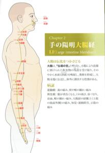 手の陽明大腸経
