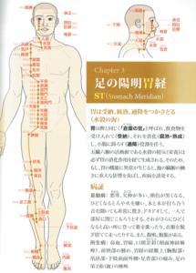 足の陽明胃経
