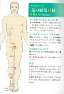 足の厥陰肝経