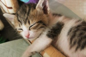 不眠に鍼灸をおすすめする理由