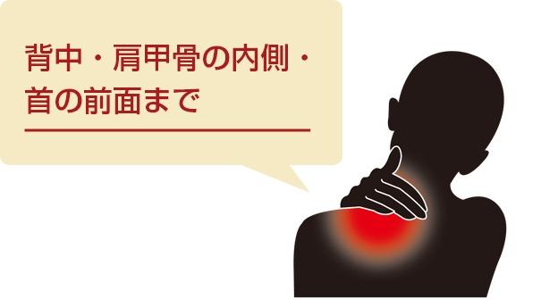背中・肩甲骨の内側・首の前面まで